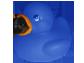 CAM duck - blue