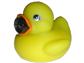 Cam Duck